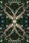 Tree creature (Mandala-HH3_070724_6611-Edit)