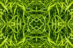 Weave of leaves (Mandala-HH3_120812_9774-Edit)