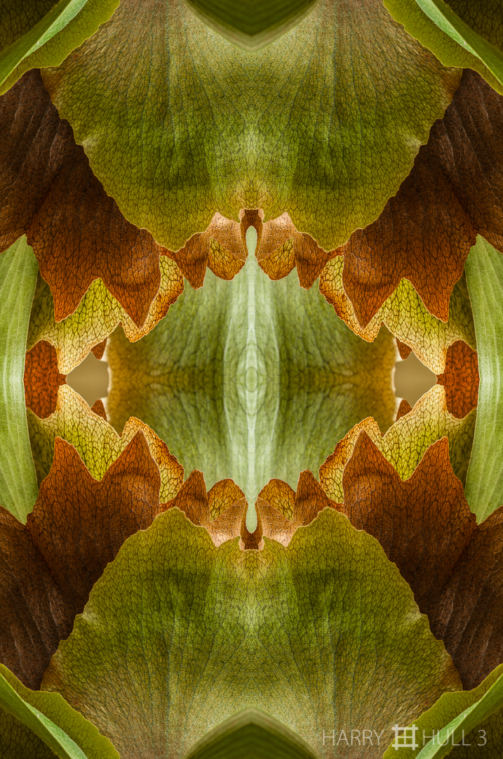 Fern grotto: version 2. Photo of staghorn fern leaves, Cabinas las Manzanas, Copey, Costa Rica.