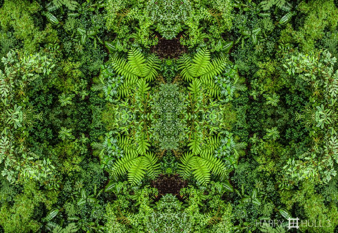 Tropical Forest Floor Mandala Cr Nov06038 Edit M A N D