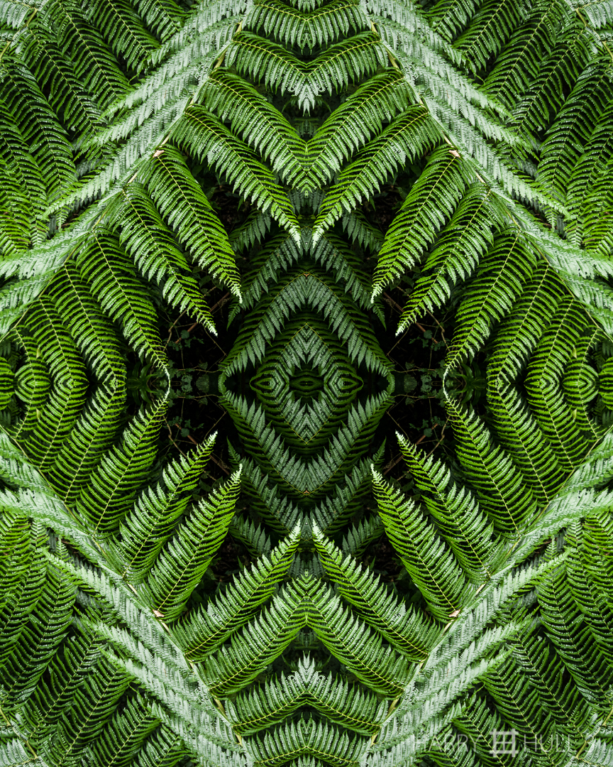 Fern trap. Photo of ferns at forest edge, Haciena la Amistad, las Mellizas, Costa Rica.