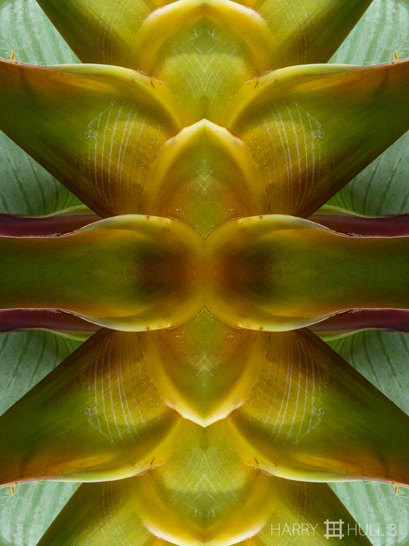 Temple of Botany altar piece: model 2. Photo close-up of heliconia bract, Paraiso de Heliconias, San Vito, Costa Rica.