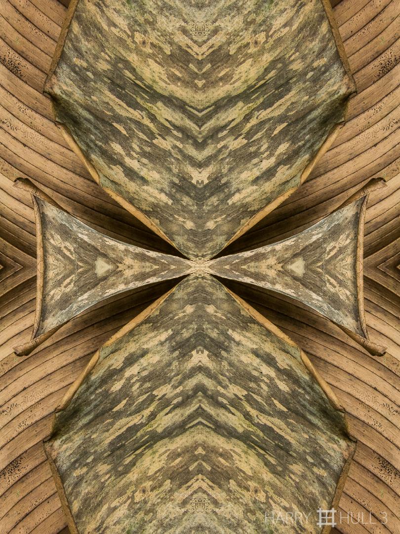Leaf memorial. Photo close-up of dead palm frond, Paraiso de Heliconias, San Vito, Costa Rica.