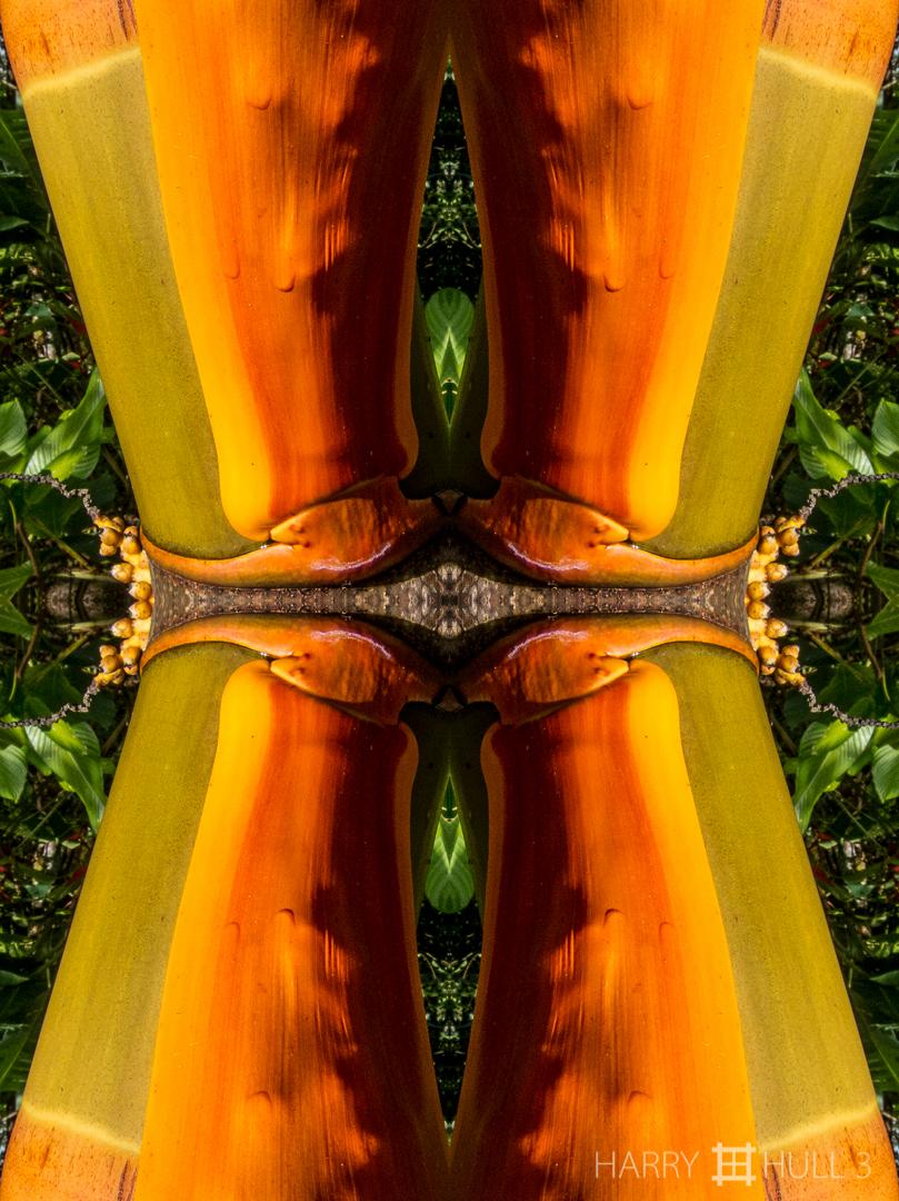 Palm regalia. Photo close-up of inflorescence sheath and trunk of palm tree, Finca Cantaros, San Vito, Costa Rica.