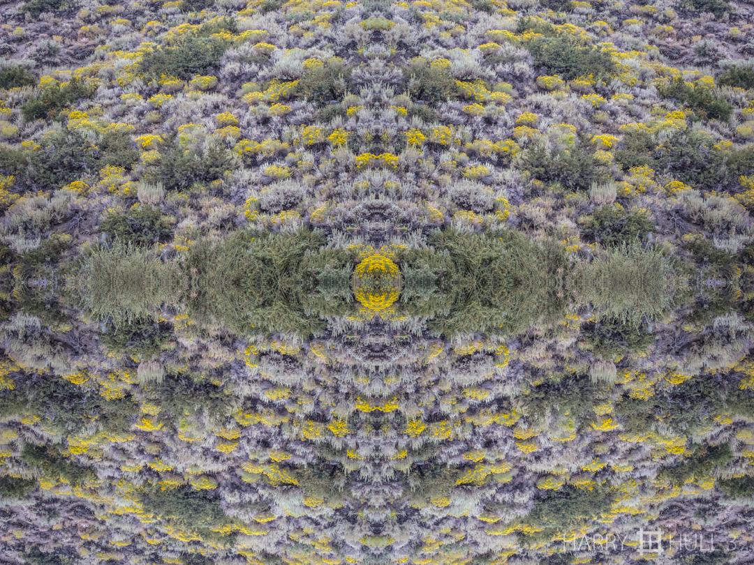 Sagebrush hypnosis. Photo of sagebrush near Mono Lake, Eastern Sierra Nevada, California.