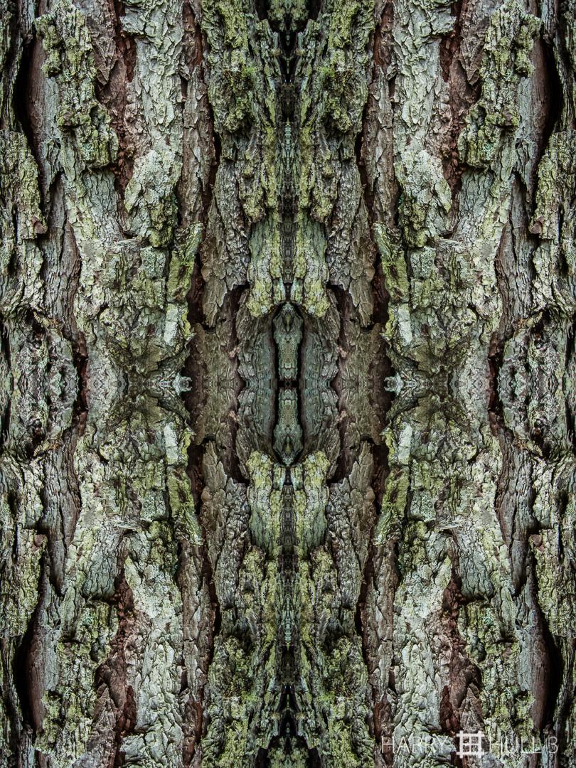 Texture study: bark. Photo close-up of pine tree trunk, Paraiso de Heliconias, San Vito, Costa Rica.