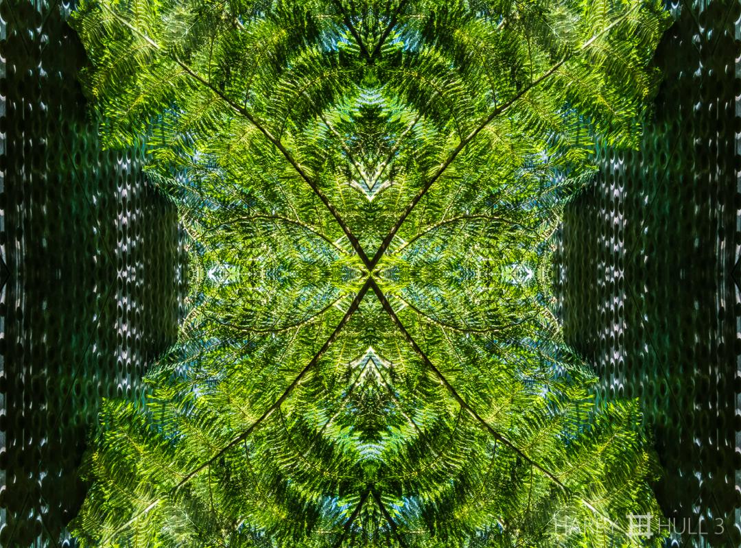 Fern force field. Photo of tree fern in interior atrium, de Young Museum, San Francisco, California.