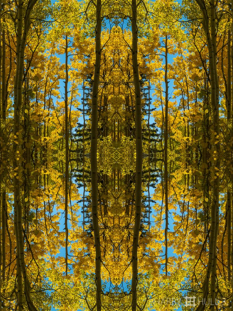 In aspen space. Photo of aspen forest in autumn, Sangre de Cristo Mountains near Santa Fe, New Mexico.