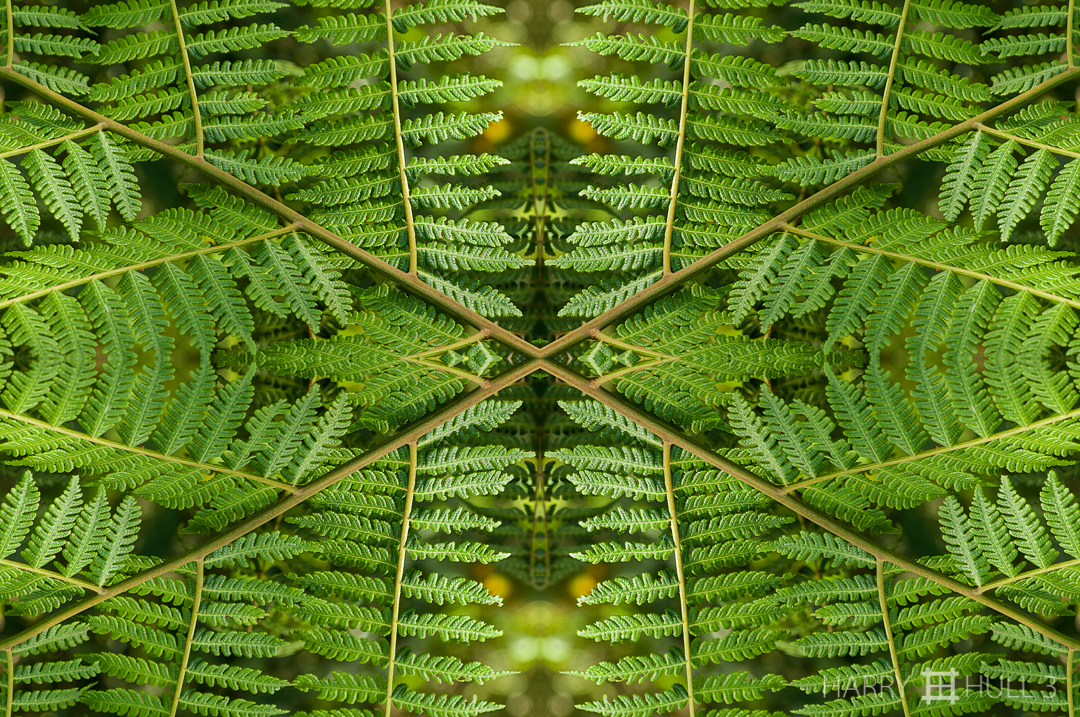 Fern fractal. Photo of fern branch, Finca Cantaros, San Vito, Costa Rica.