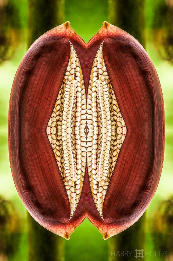 """Open wide…"" Photo close-dup of inflorescence sheath of a palm tree, Finca Cantaros, San Vito, Costa Rica."