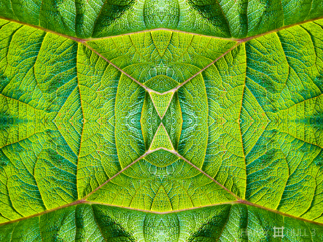 Leaf topography. Photo close-up of a large leaf, Ecuador.