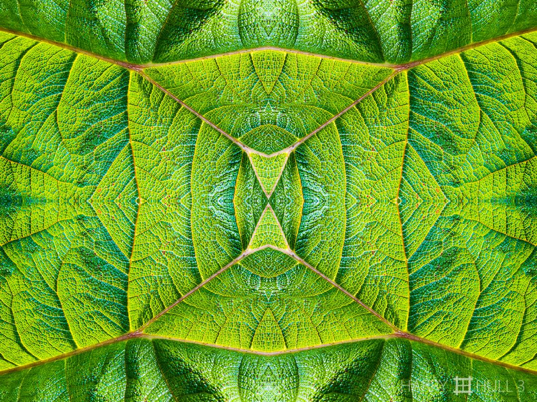 Leaf topography. Photo close-up of a large leaf, Ecuador.