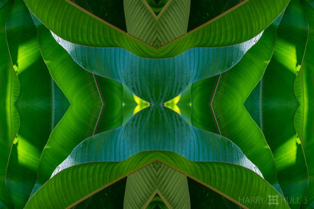 Botanic time. Photo of heliconia leaves, Finca Cantaros, San Vito, Costa Rica.