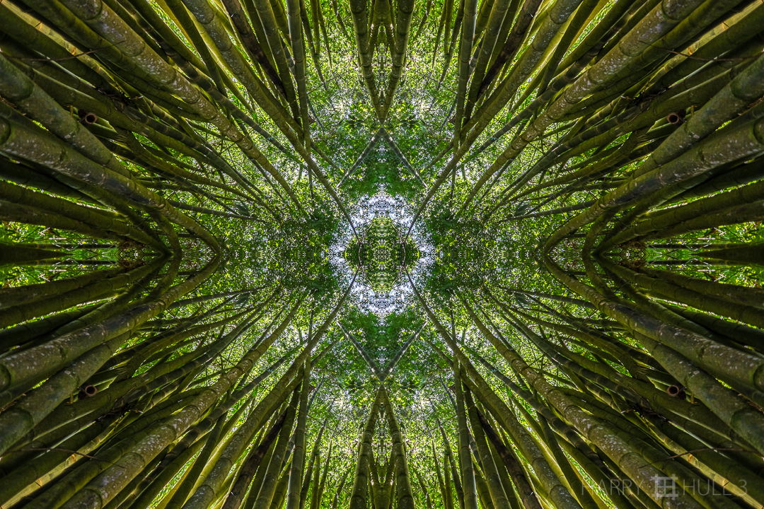 Sacred grove. Photo taken from within the center of a bamboo grove on the grounds of Cascata del Bosco, San Vito, Costa Rica.