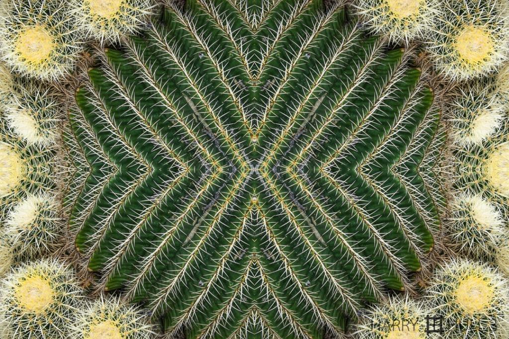 Prickly crown. Photo of cactus in the Desert Garden, Huntington Gardens, San Marino, California.