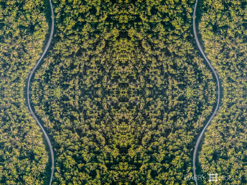Incursion. Photo of a road through forest in western Belize, taken from a small plane.