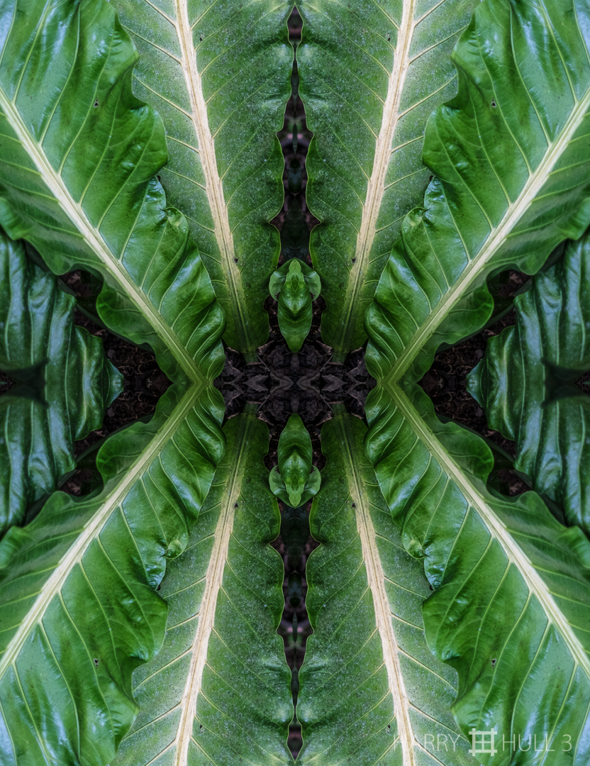Leaf edges. Photo of the leaves of the Tabacon plant, Finca Cantaros, San Vito, Costa Rica.