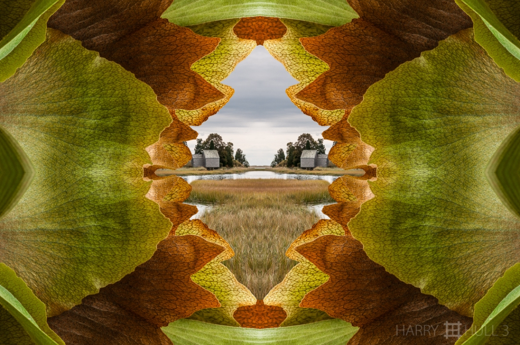 Marsh view. Photo composite: mandalagraph of a Staghorn fern in Copey de Dota, Costa Rica, with a mirror-image of a salt water marsh on Cape Cod, Massachusetts.