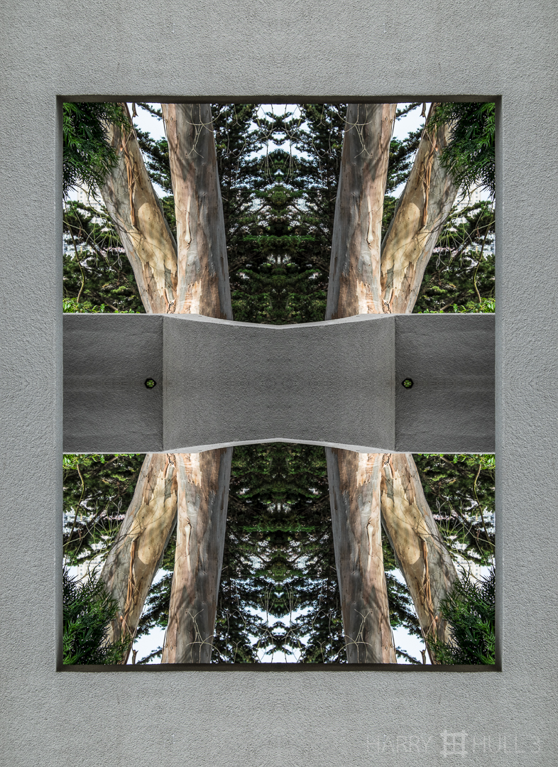 Framed eucalyptus. Photo of eucalyptus trees through a concrete portal near the entrance to Coit Tower, Telegraph Hill, San Francisco, California.