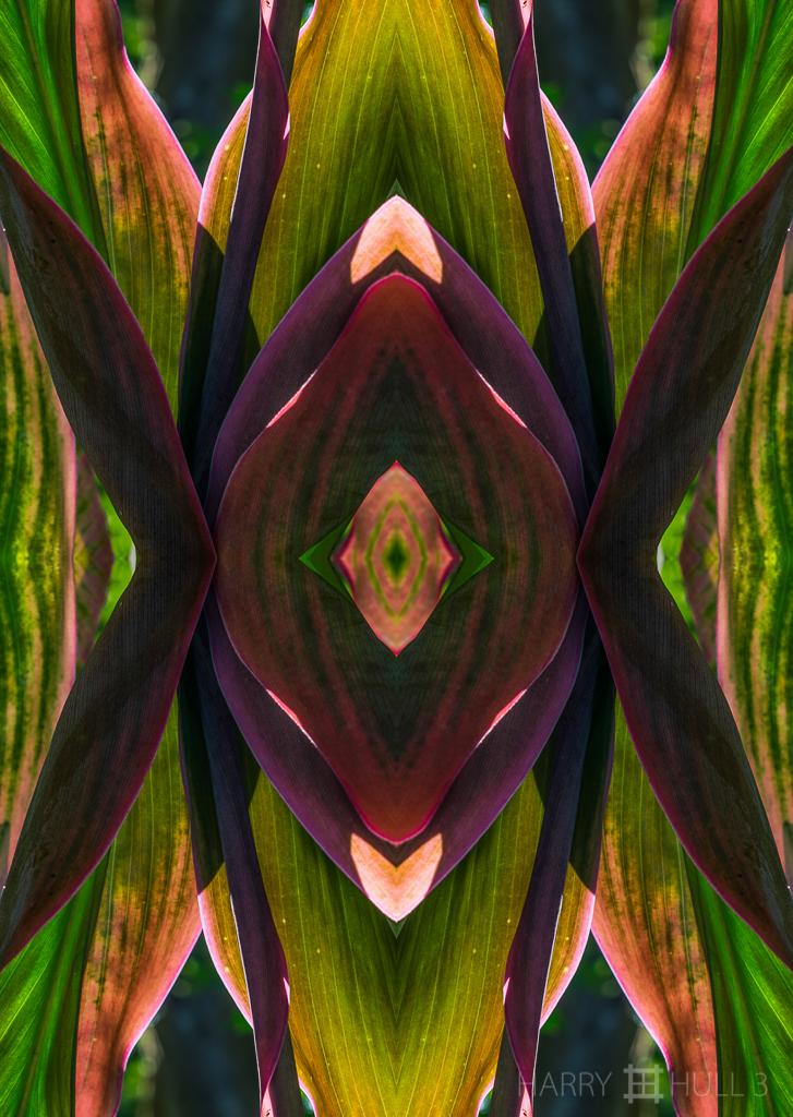 Cordyline conversation (Mandala-HH3-140309-0716F-Edit-2)