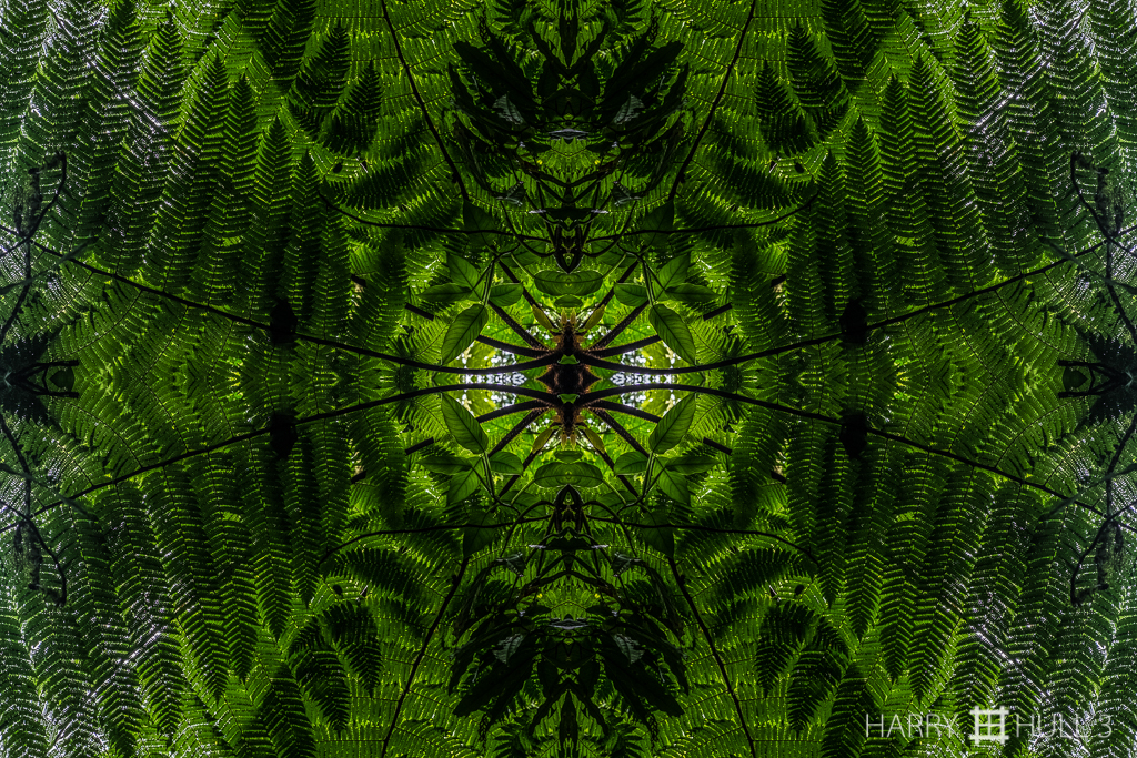 Fern focus (Mandala-HH3-150620-5502F-Edit)