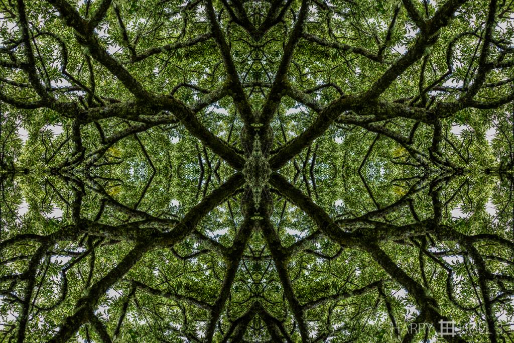 Canopy web (Mandala-HH3-150726-6191F-Edit)