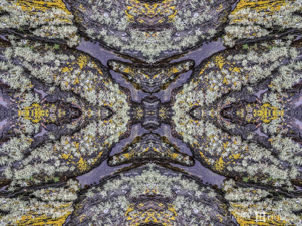 Lichen landscape (Mandala-HH3_150728_3017i-Edit)
