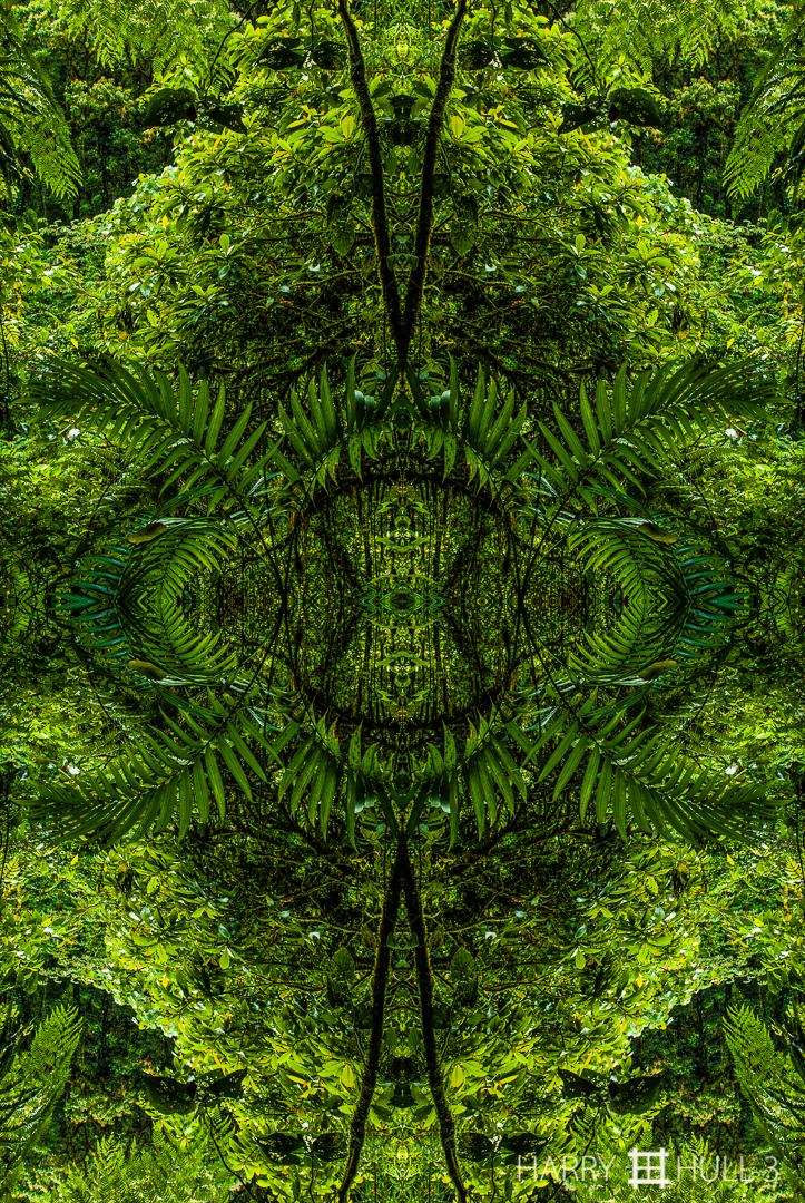 Canopy opening (Mandala-HH3_080727_0318-Edit)