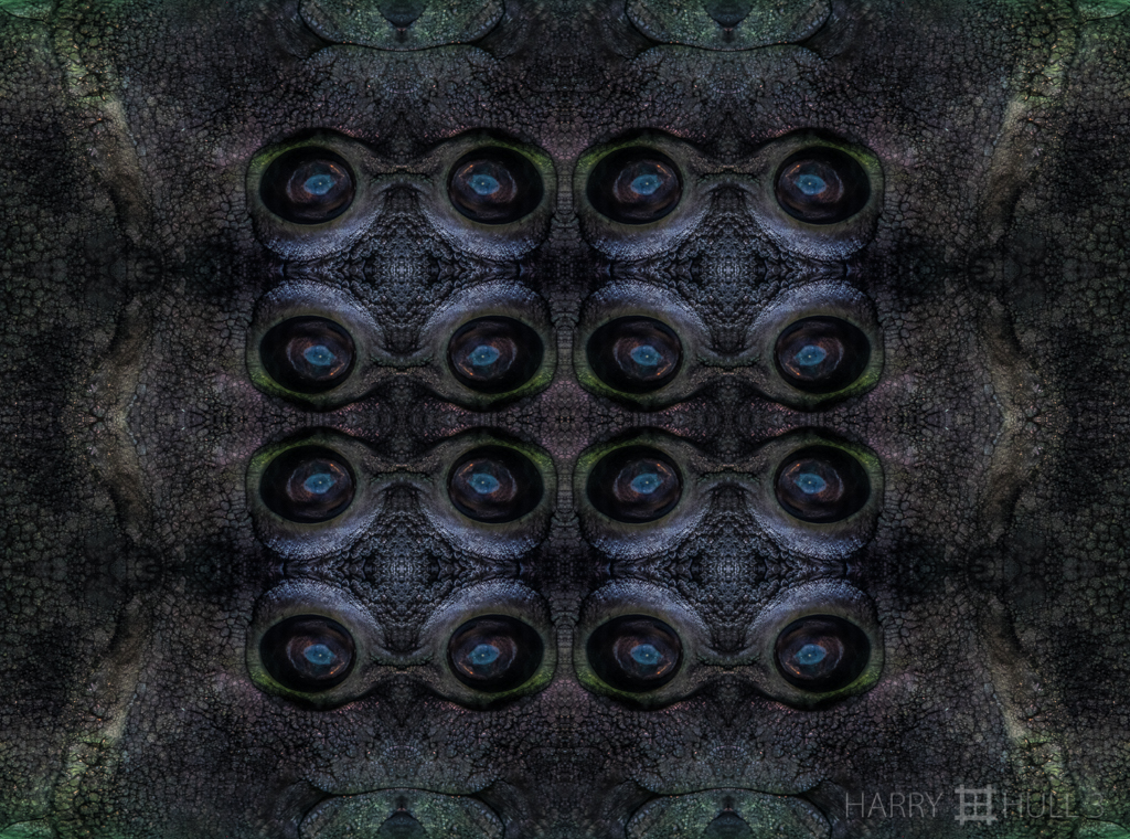 Fish eyes (Mandala-HH3-150313-4729F-Edit-Edit)