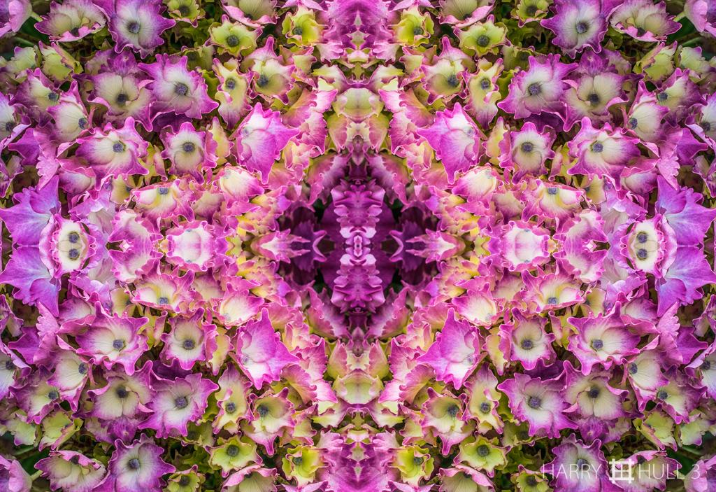 Blossom concert (Mandala-HH3-150726-6157F-Edit)