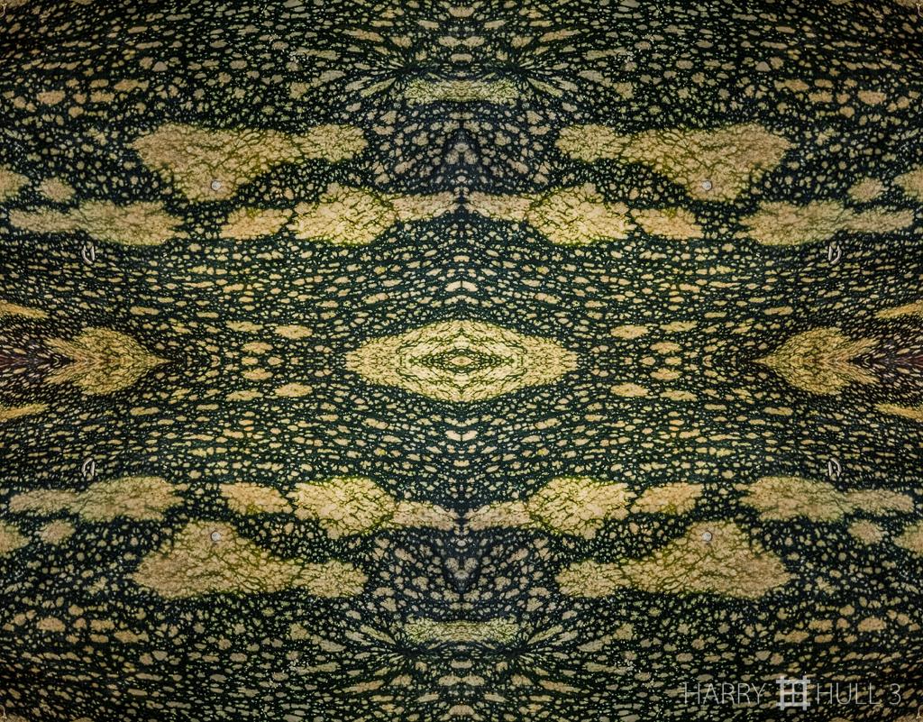 Cucurbita cosmos (Mandala-HH3-151127-6856F-Edit-2)