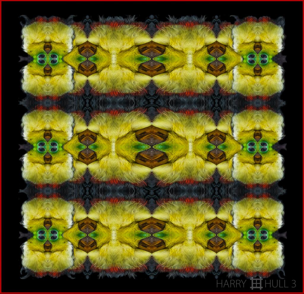 Toucan robe (Mandala-HH3_080727_0195 toucan)