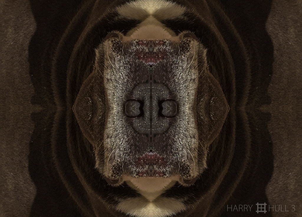 The nose knows (Mandala-HH3_150921_3238i-Edit)