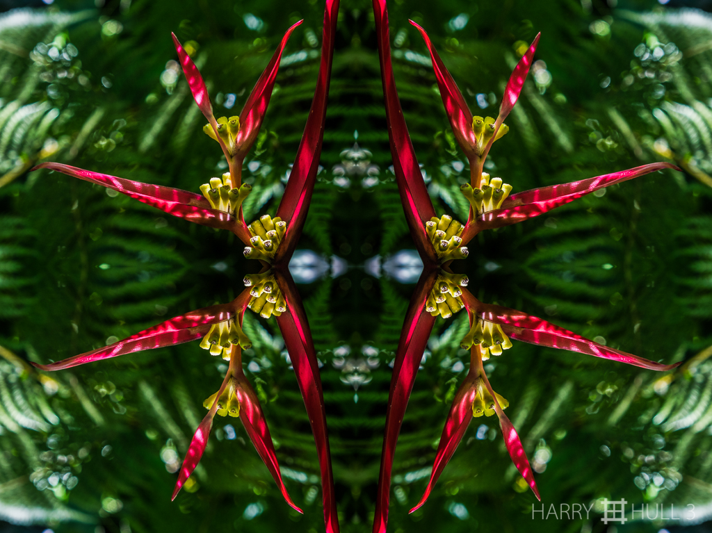Heliconia holiday (Mandala-HH3-150322-4949F-Edit)