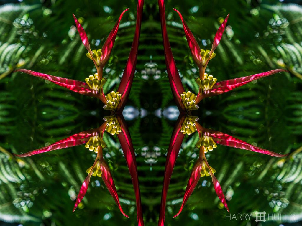 Heliconia holiday (Mandala-HH3-150322-4949F-Edit)