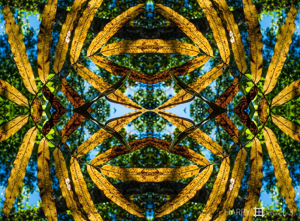 Fading fern (Mandala-HH3-160108-6990F-Edit)