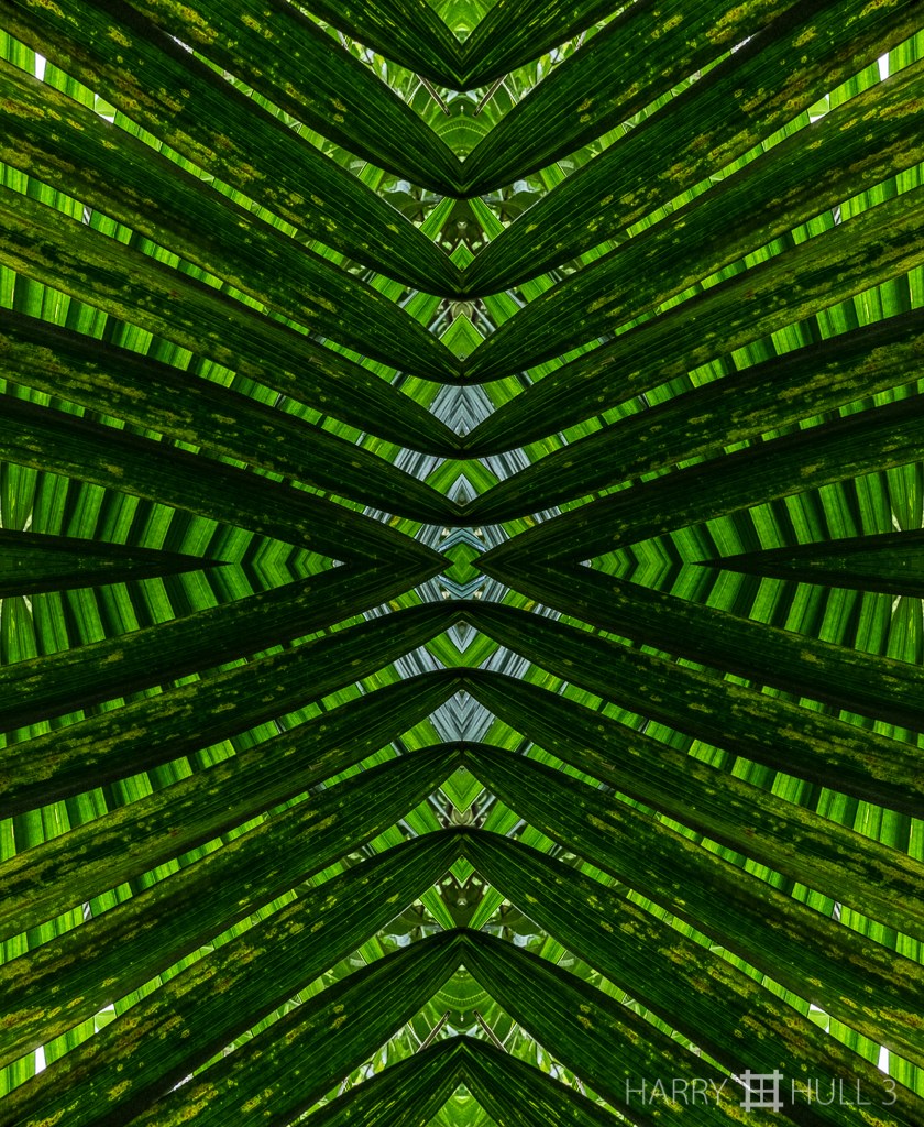 Palm persuasion (Mandala-HH3_160114_7063F-Edit)