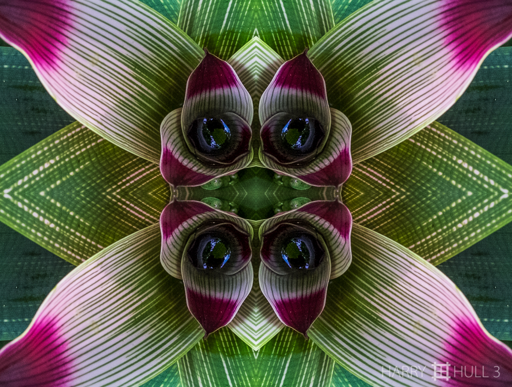 Bromeliad surprise (Mandala-HH3_160114_7072F-Edit-3)