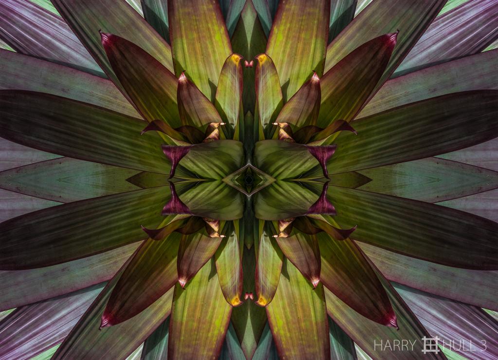 Leafy locus (Mandala-HH3_160116_7093F-Edit)