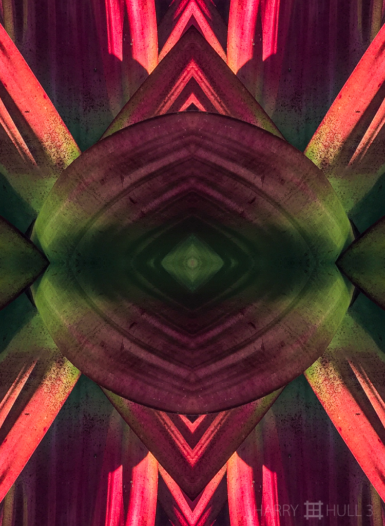 Bromeliad barrier (Mandala-HH3_160123_3507i-Edit)