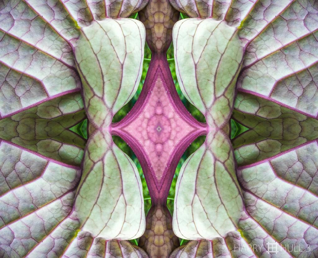 Organ trans-plant (Mandala-HH3_160126_3548i-Edit-5)