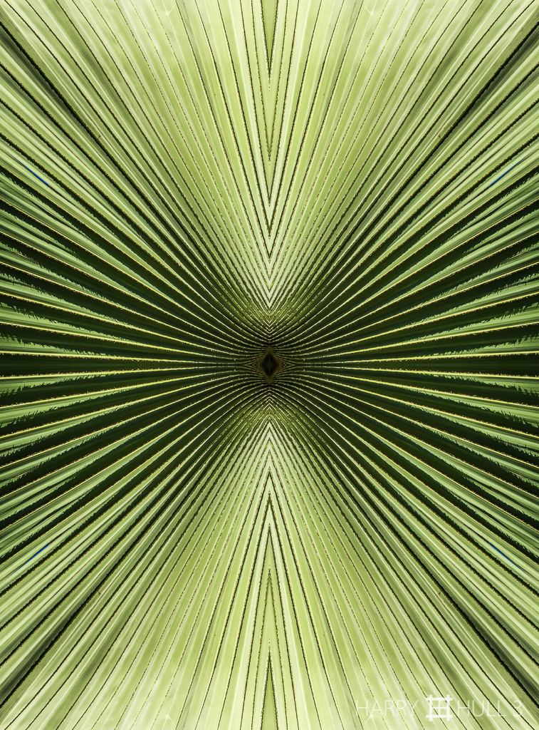Op art: palm (Mandala-HH3_160123_3517i-Edit)