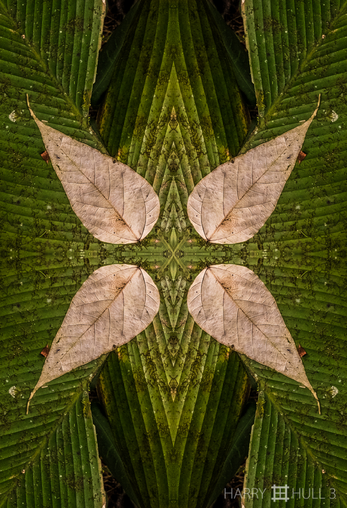 Nature morte: Leaf Lament (Mandala-HH3_160208_7131F-Edit)
