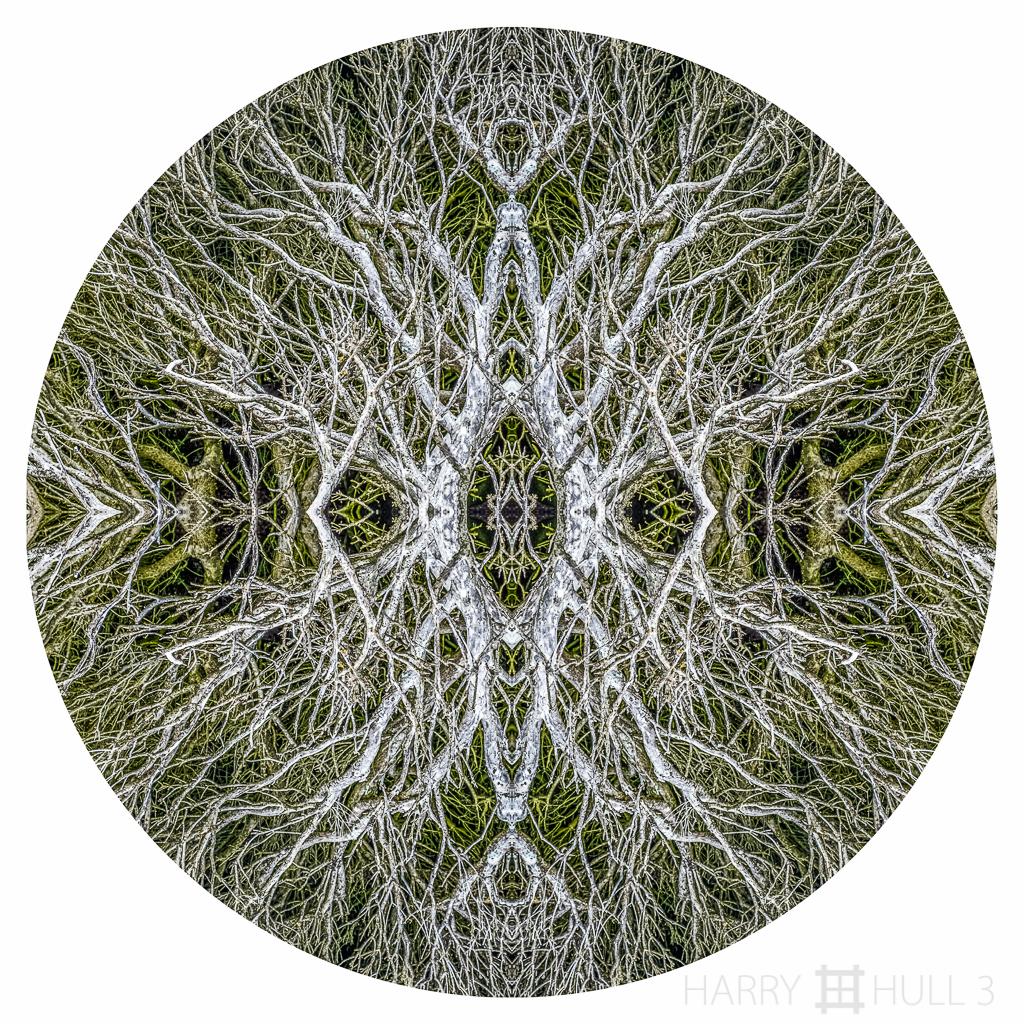 Branching: homage to Janine Mackintosh (Mandala-HH3_160415_7799F-Edit-2-Edit)