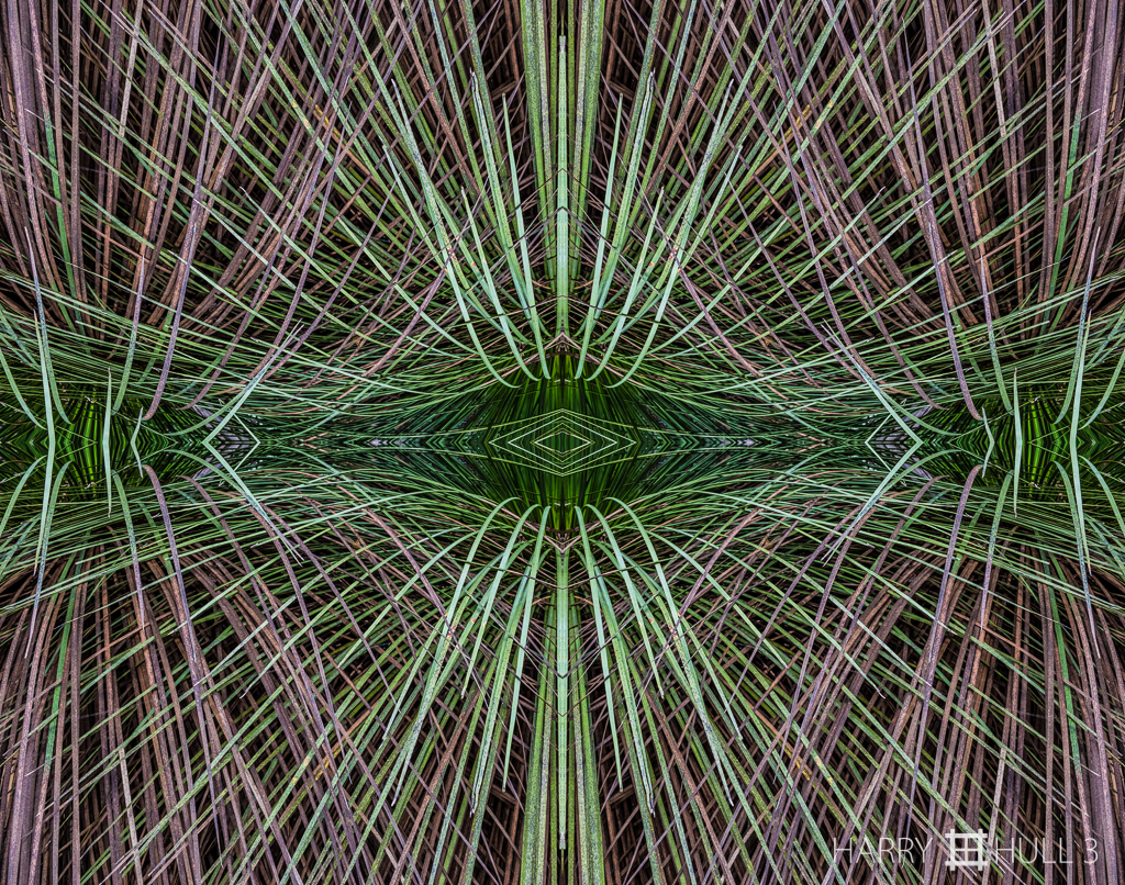 """The force that through the green fuse..."" (Mandala-HH3_160415_7829F-Edit-2)"