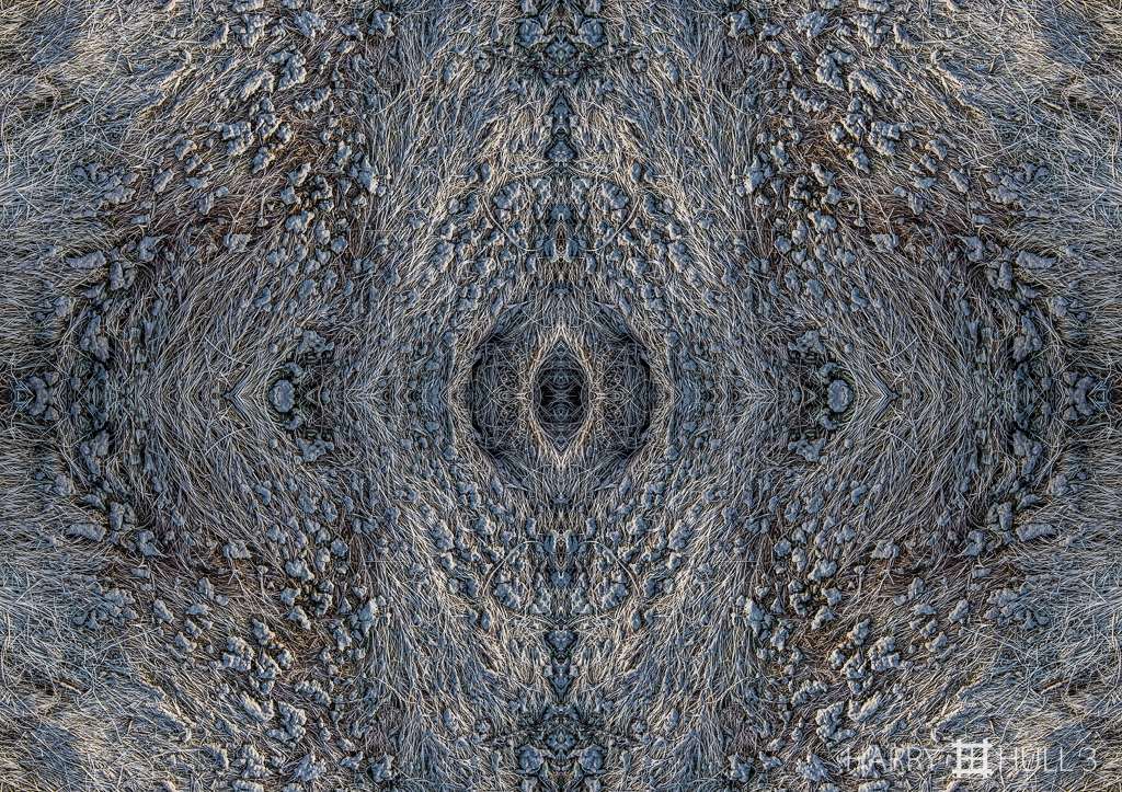 Grass galaxy (Mandala-HH3_160416_7920F-Edit)
