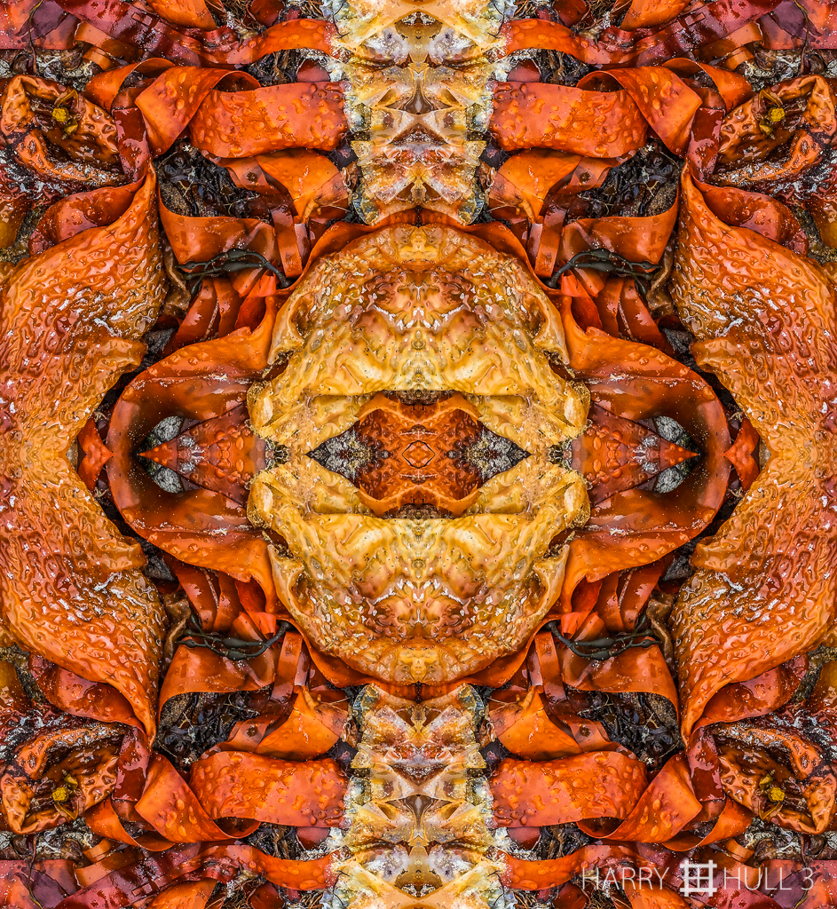Beach bonanza (Mandala-HH3_150728_2998i-Edit)