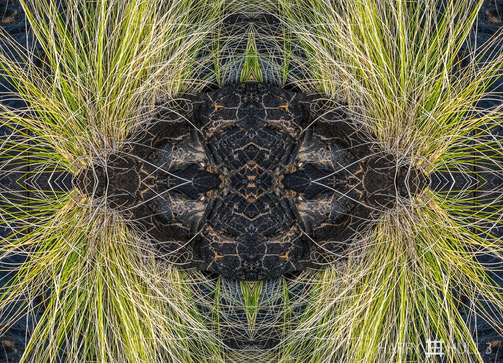 Hawaiian eye(s) (Mandala-HH3-150319-4888F-Edit)