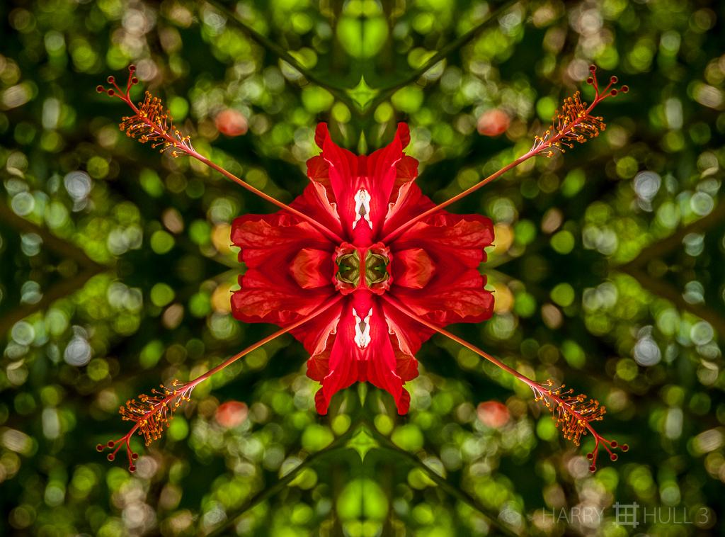 Eyes of the flower (Mandala-HH3_100125_5058-Edit)