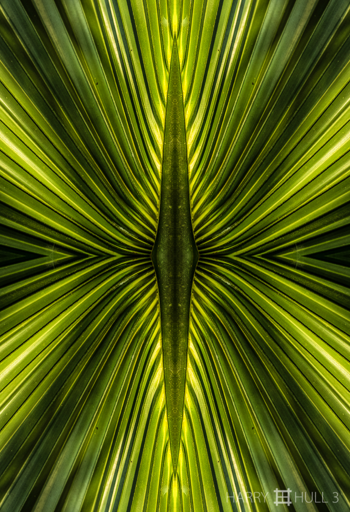 Frond forces (Mandala-HH3_160827_0165F-Edit)